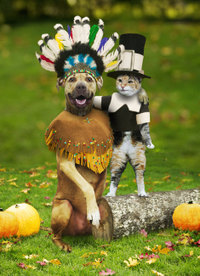 Thanksgivingdog